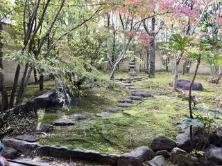 岩壁の隣の木の写真・画像素材[2740165]