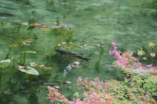 池の色とりどりの花のグループの写真・画像素材[1537265]