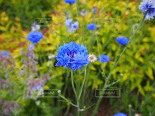 不思議な色の花の写真・画像素材[2176931]