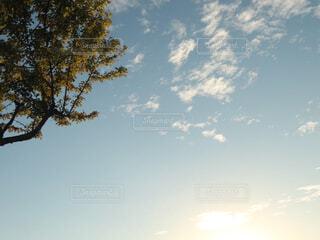 秋の木と空の写真・画像素材[1534572]