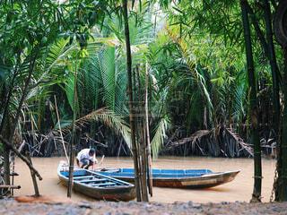 水の体の中に小さなボートを持つヤシの木のグループの写真・画像素材[2386388]