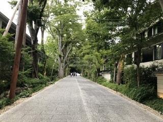 森林の道の写真・画像素材[1533766]
