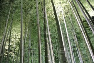 竹林の中の写真・画像素材[1534103]