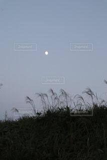秋の夕暮れの写真・画像素材[1560046]