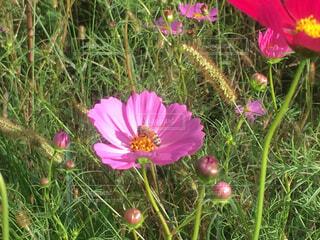 植物にピンクの花の写真・画像素材[1533632]