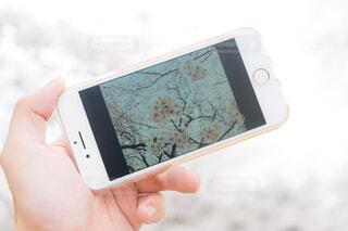 携帯電話を持っている人の写真・画像素材[1533744]