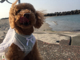 近くのビーチに犬のアップの写真・画像素材[1536369]