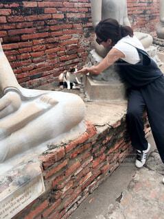 遺跡の像と猫の写真・画像素材[1536868]