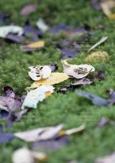 緑の草のグループの写真・画像素材[1534703]