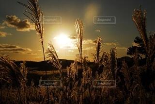 夕日が背景にあるヤシの木の群れの写真・画像素材[2696546]