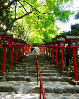 貴船神社の階段の写真・画像素材[1537329]