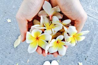 花の写真・画像素材[139429]