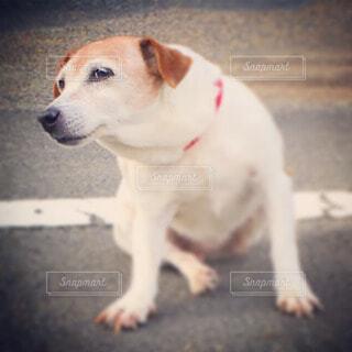 犬 - No.50969