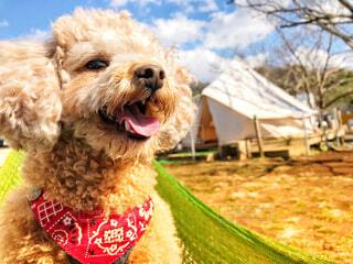 愛犬とキャンプの写真・画像素材[1541382]