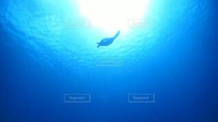 天に昇るような海ガメの写真・画像素材[1545516]
