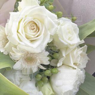 サプライズで花束を。の写真・画像素材[4446192]
