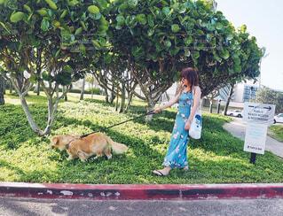 愛犬とお散歩の写真・画像素材[1542304]