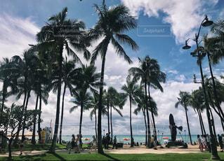ワイキキビーチの写真・画像素材[1542510]