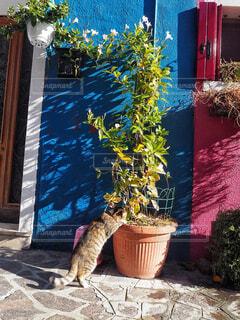 猫さまの寄り道🐈の写真・画像素材[1584344]