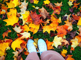 落ち葉の絨毯の写真・画像素材[1585535]