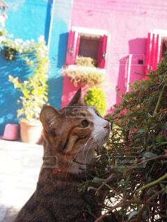 猫さまパートllの写真・画像素材[1591629]