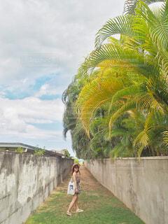 カイルアビーチへ続く道の写真・画像素材[1605380]