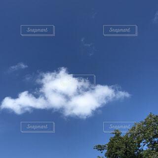 青い空の写真・画像素材[1539131]