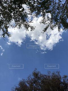 青い空と木の写真・画像素材[1539159]