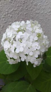 近くの花のアップの写真・画像素材[1540192]