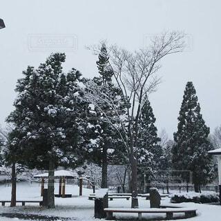 雪景色の写真・画像素材[1541414]