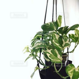 植物のある生活の写真・画像素材[1538870]