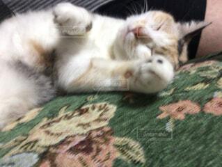 ベッドの上で横になっている猫の写真・画像素材[1539068]