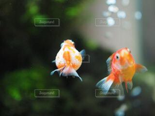 魚の写真・画像素材[1574525]