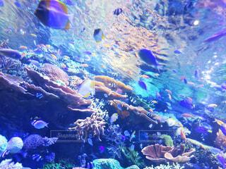 サンゴの水中ビューの写真・画像素材[1554846]