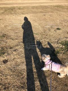 愛犬と私の影の写真・画像素材[3484284]