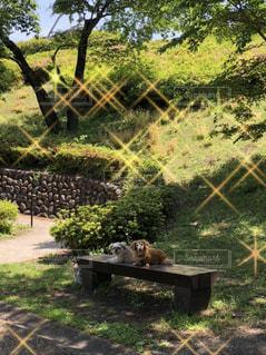 公園の木もれ日にたたずむ愛犬たちの写真・画像素材[3486172]