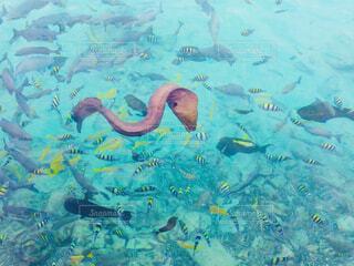 海面から見えた熱帯魚とウツボの世界の写真・画像素材[1539516]