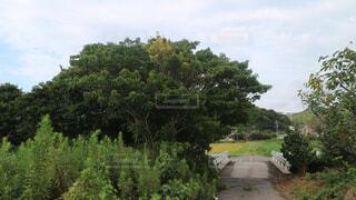 森林 - No.685084