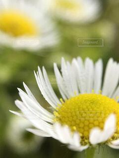 庭に咲いた小さな花の写真・画像素材[1602102]