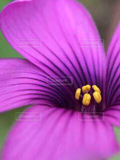 庭に咲く小さな花の写真・画像素材[1602106]