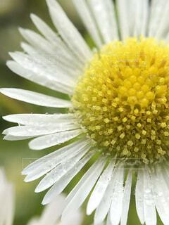 庭に咲く花の写真・画像素材[1602263]