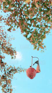銀杏が浮いてる~の写真・画像素材[1626261]