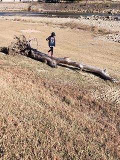 流木の上を歩く女の子の写真・画像素材[1697810]