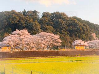 駅と桜の写真・画像素材[1883009]