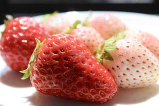 皿の上の食べ物の写真・画像素材[1557961]