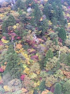 秋の森の写真・画像素材[1540057]