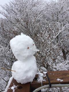 雪だるまの写真・画像素材[1540073]