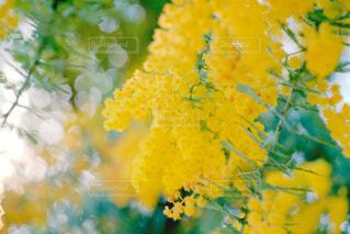 花の写真・画像素材[396877]