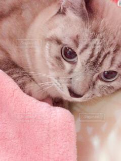 ゲージの中の美猫の写真・画像素材[1540240]