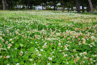 フィールドの花の写真・画像素材[1557186]